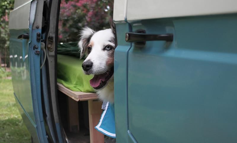 Mit Wohnmobil und Hund auf Reisen